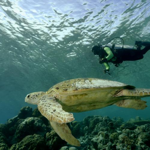 Tes Genetika, Cara Baru Penelitian Keragaman Hayati Laut Indonesia