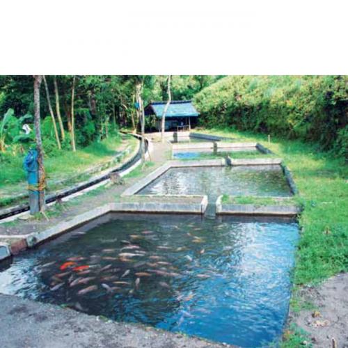 Analisa Kualitas Air Budidaya Ikan: Parameter Kimia