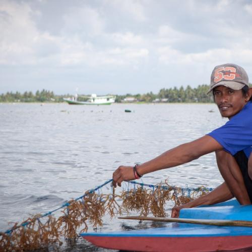 Bisa Kuasai Pasar Dunia, KKP Ajak Masyarakat Gali Potensi Rumput Laut Indonesia SIARAN PERS