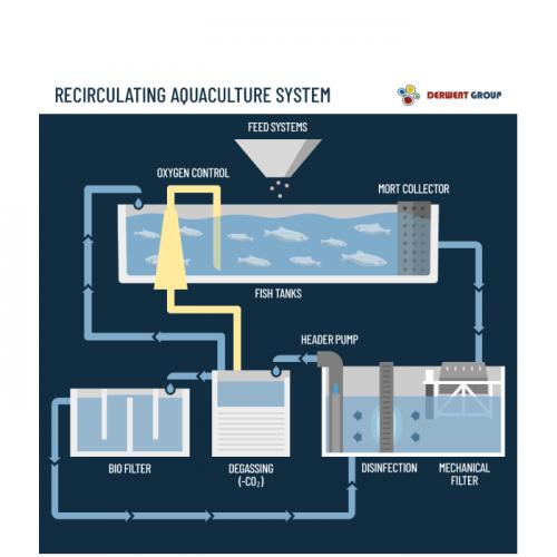 Cara Kerja Recirculating Aquaculture System yang Perlu Anda Ketahui