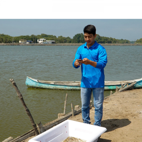 Shrimp Farmers in Ecuador Tap An App To Seal A Better Deal