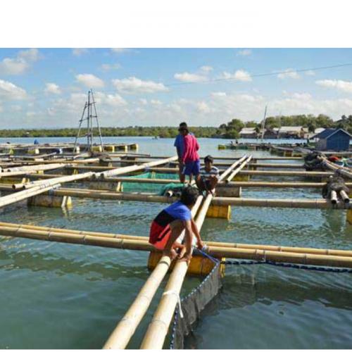 Tantangan Menjaga Kualitas dan Kuantitas Kadar Oksigen Terlarut di Keramba Jaring Apung