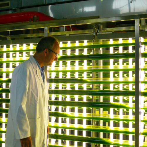 Making Algae Can Get Expensive. Innovations Aim to Bring Costs Down