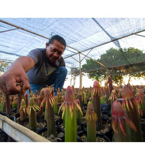 Silvofishery, Alternatif Pelestarian Hutan Mangrove
