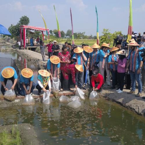 KKP Gaungkan Minapadi ke 5 Benua