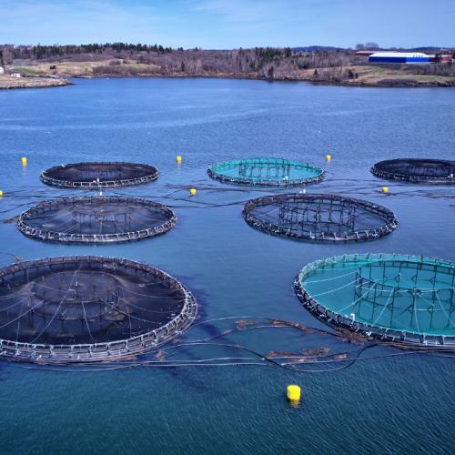 Aquaculture Becomes A Net-Positive