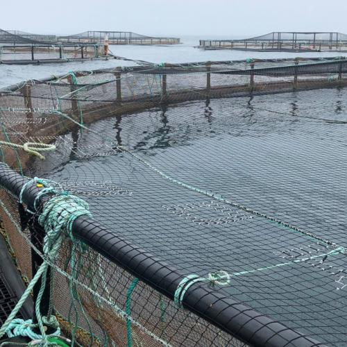 Net Gains in Aquaculture Net Technology