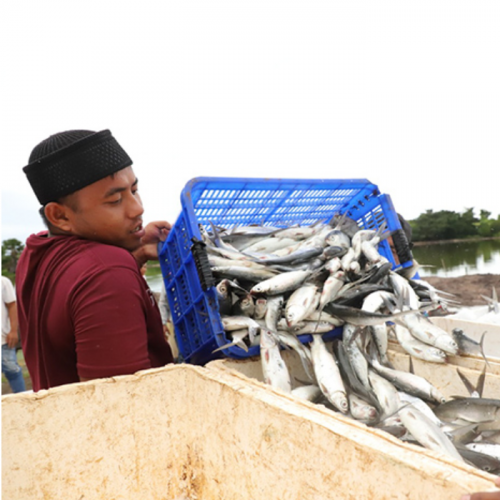 Dorong Budidaya Ikan Lokal Agar Tak Punah