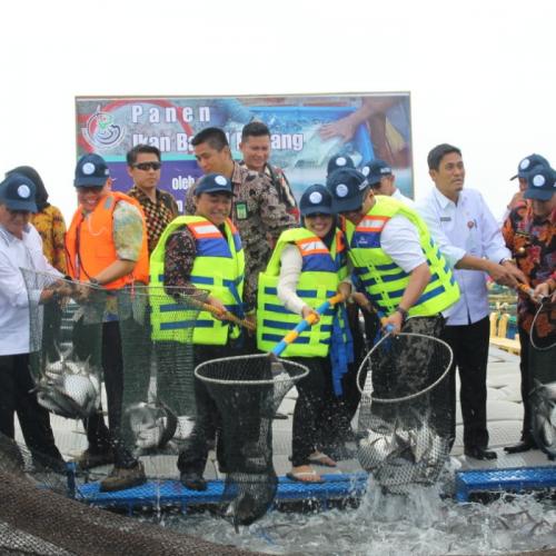 KKP Pacu Produksi Komoditas Marikultur di Riau