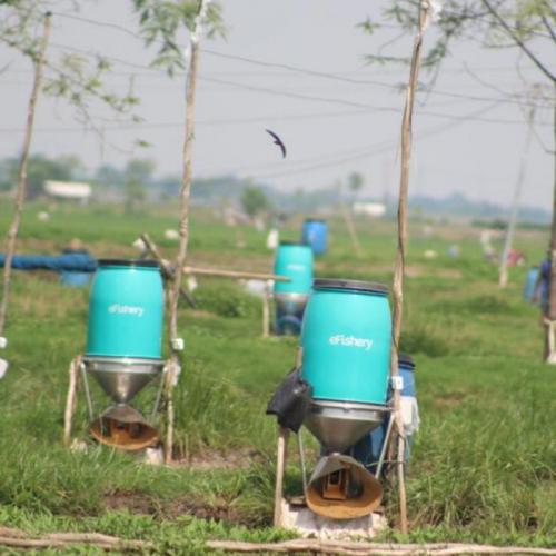 Gandeng eFishery, Perusahaan Ini Siapkan Rp 30 M untuk Pembudidaya Ikan