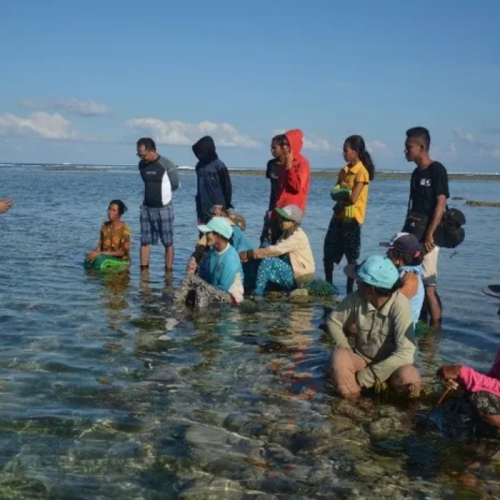 Helping Seaweed Farming Achieve Its Full Potential