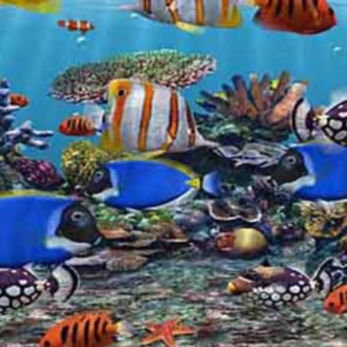 Nusatic 2019, Pameran Ikan Hias Kembali Digelar pada 29 November - 1 Desember