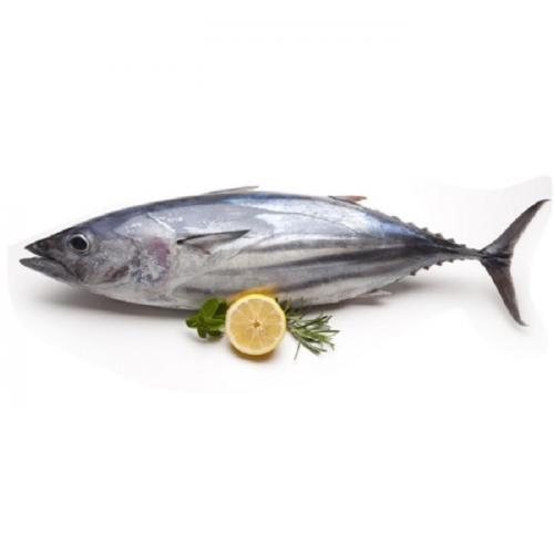 infomina manfaat konsumsi ikan tongkol saat pandemi covid 19 manfaat konsumsi ikan tongkol saat