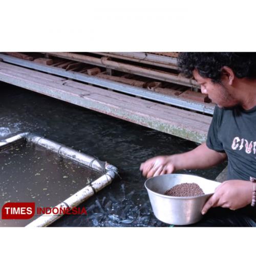 Kelompok Tani Remen Tandur Manfaatkan Bakteri Nitrosomonas untuk Budidaya Ikan dan Tanaman