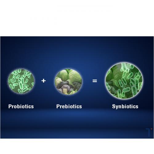 In Short, Synbiotics Are Probiotics and Prebiotics?