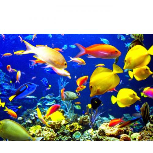 Budidaya Ikan Hias, Jurus Jitu Cegah Eksploitasi di Alam
