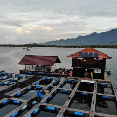 Perum Perindo Offers Aquaculture with Aqua Tourism Concept