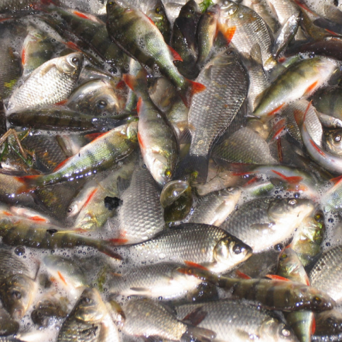 Global Trends in Antimicrobial Use in Aquaculture