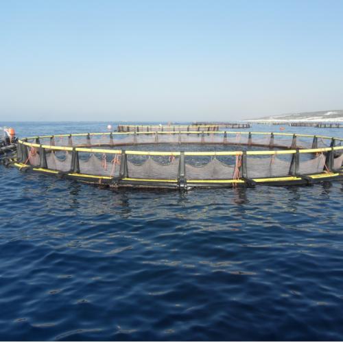 Bisnis Marine Culture Solusi Percepat Pembenihan Ikan