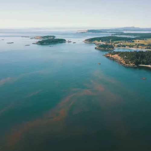 Algae Detection System Aims to Help Aquaculture Bloom