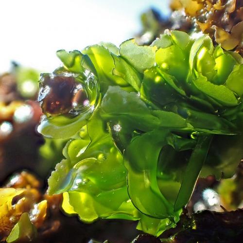 Use Biofilter to Minimize Nitrogen Waste