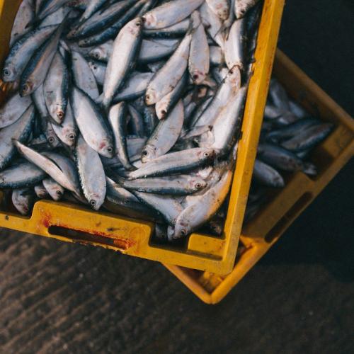Potensi Bisnis: Berikut 5 Macam Ikan Konsumsi yang Mudah untuk Dibudidayakan