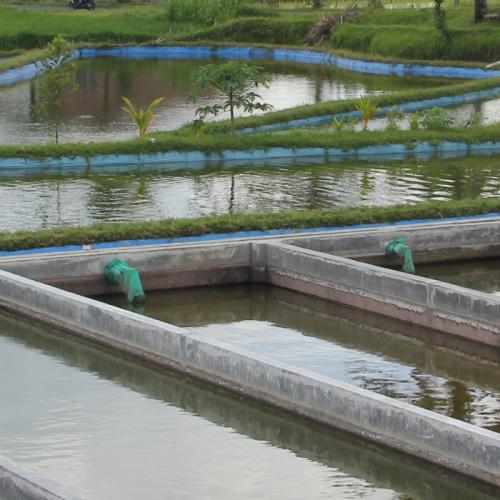 Cara Menaikkan dan Menurunkan pH Air Secara Alami