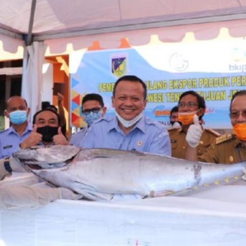 KKP Siap Kembangkan Budidaya Tuna di Teluk Tomini