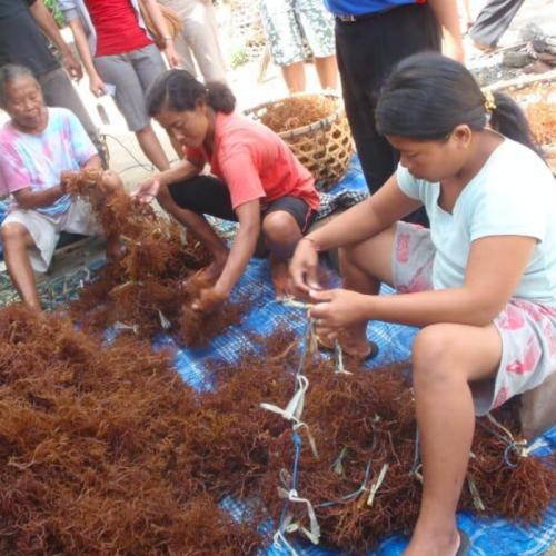KKP Dorong Eskpansi Pasar Ekspor Rumput Laut di Tengah Pandemi