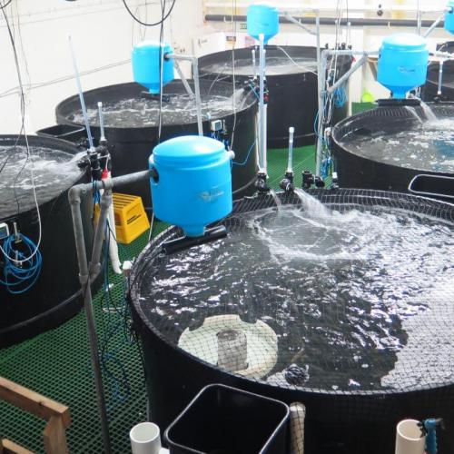 Teknologi Ini Percepat Produksi Benih Ikan Berkelanjutan