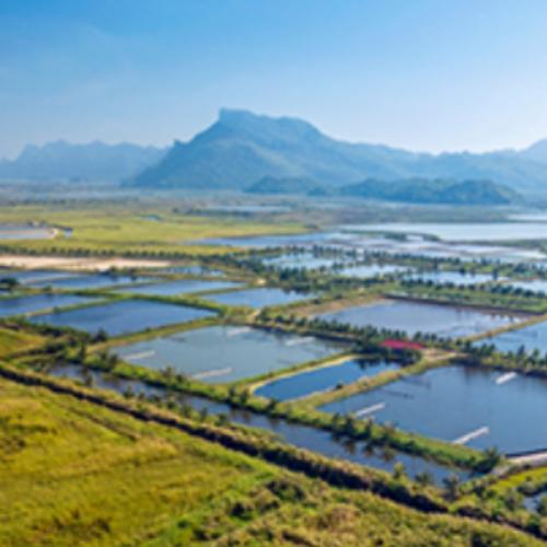 Sustainable Fisheries Partnership Unveils New Aquaculture Improvement Toolkit