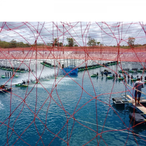 Marketplace to Industry, Governments: Solve Shrimp Diseases