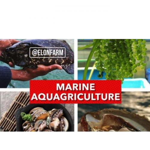 Marine Aquagriculture, Terobosan Polikultur Berbasis Air Laut