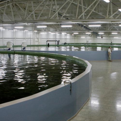 Lighting in Aquaculture Facilities