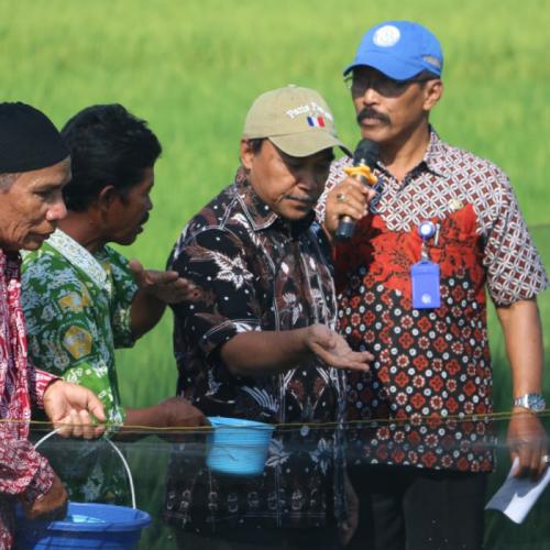KKP Dorong Perluasan Kawasan Minapadi di DIY