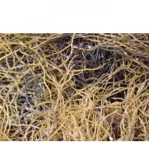 Cara Memilih Bibit Rumput Laut Berkualitas Baik