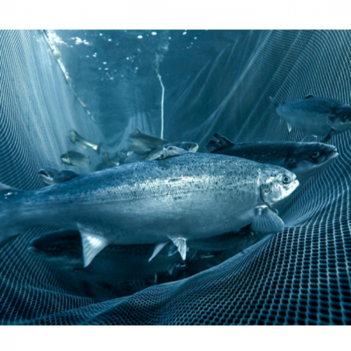 Bluegrove Aims to Change Aquaculture Via Technology – Starting with Salmon