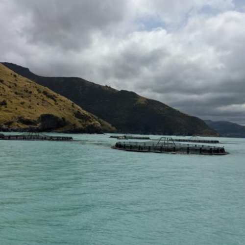 'Water-forecasting' and Fish Farms Fed on Waste