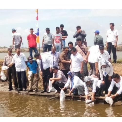 Budidaya Ikan Berbasis Kawasan, Solusi Ciptakan Lapangan Kerja