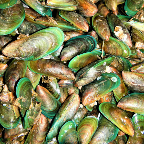 Green Mussel Culture Using Longlines and Traditional Stake Methods in Indonesia