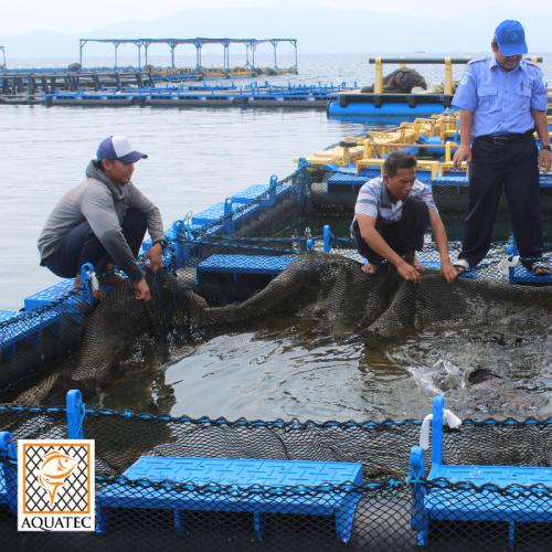 Menanggulangi Penyakit Infeksi Pada Ikan Laut