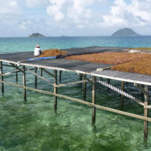 Produk Rumput Laut Indonesia Unjuk Gigi di Simposium Internasional di Jeju