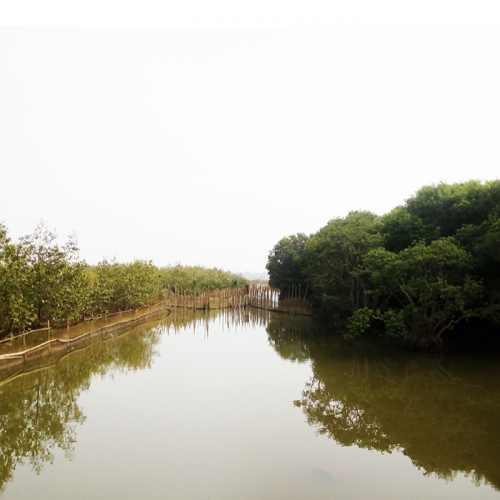 Technology of Intercropping Tiger Shrimp - Crab - Mullet in Mangrove Forests