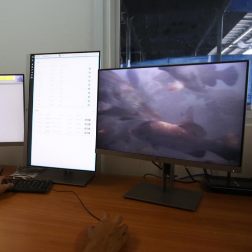 AI Keeps an Eye on Barramundi at 'Smart' Floating Fish Farm Off Pasir Ris Coast