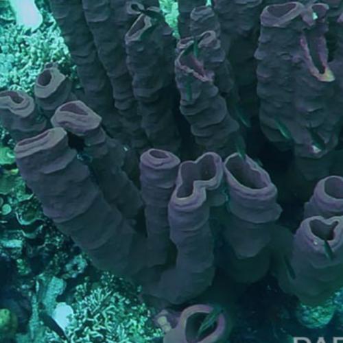 Digitalisasi Bahan Alam Laut Indonesia
