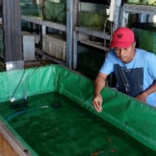 Dinas Perikanan Rangkul Komunitas Ikan Hias