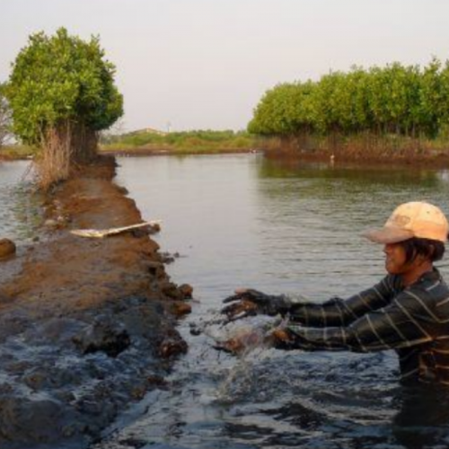 Indonesian Aquaculture Startup Secures Seed Funding in 500 Startups-led Round