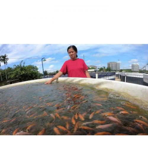 Sekali Panen Ikan Raup Cuan Belasan Juta, Mau Coba Jadi Petani Milenial?
