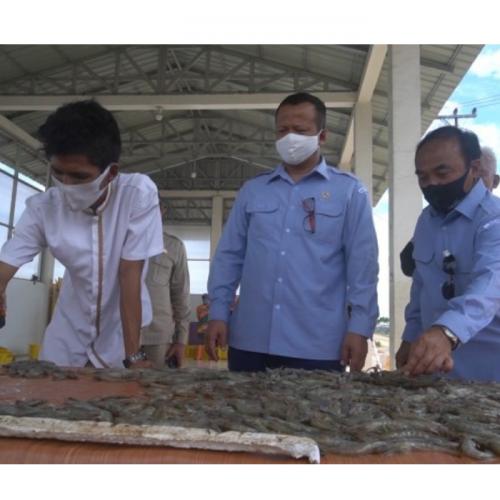 Geliat Budidaya Udang, Optimisme Pergerakan Ekonomi Pasca Pandemi