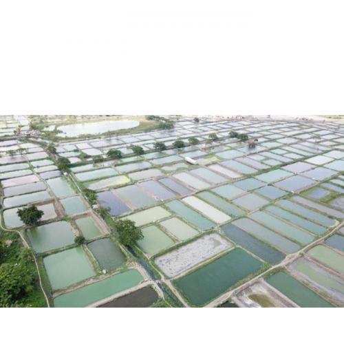 Perluas Akses Pembiayaan Usaha, KKP Genjot Legalitas Kepemilikan Lahan Budidaya Ikan